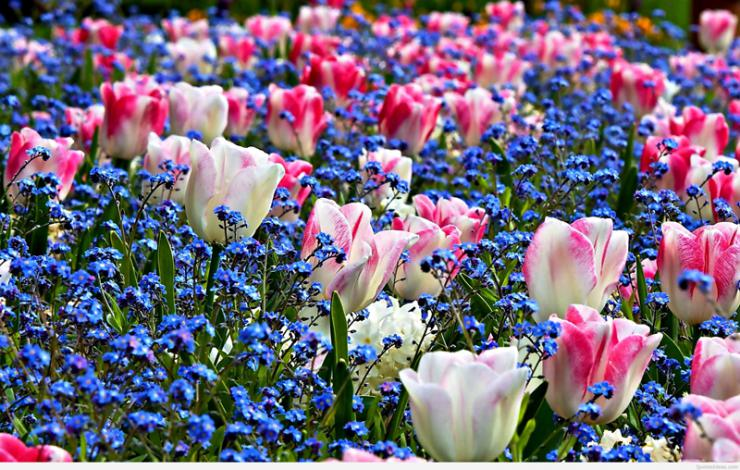 spring-flowers-wallpaper-images.jpg