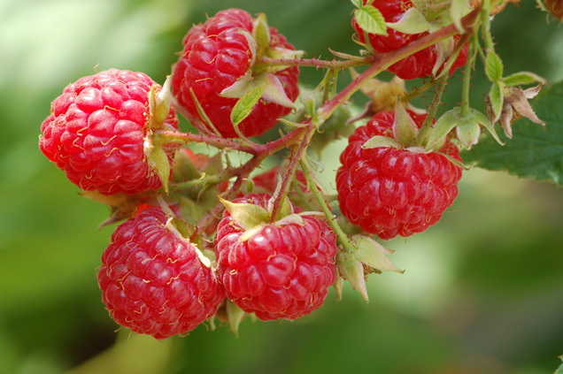 red-raspberries-636.jpg