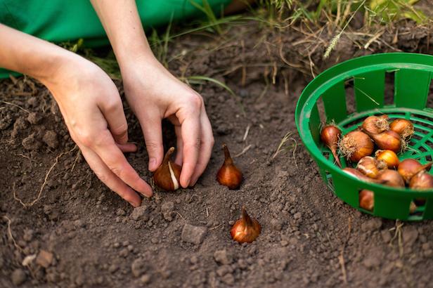 календарь посевов и посадок октябрь