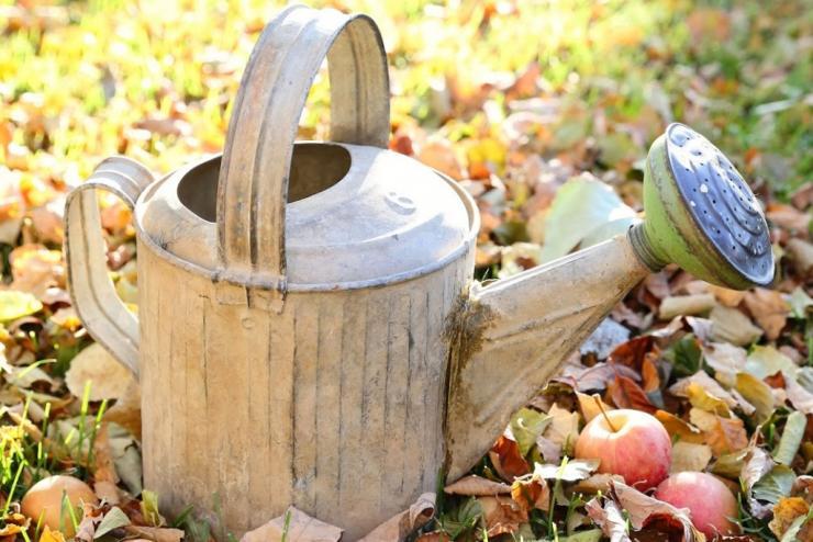 полив в саду октябрь