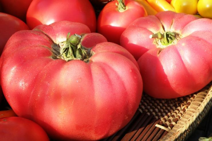 розовые сорта томатов для открытого грунта