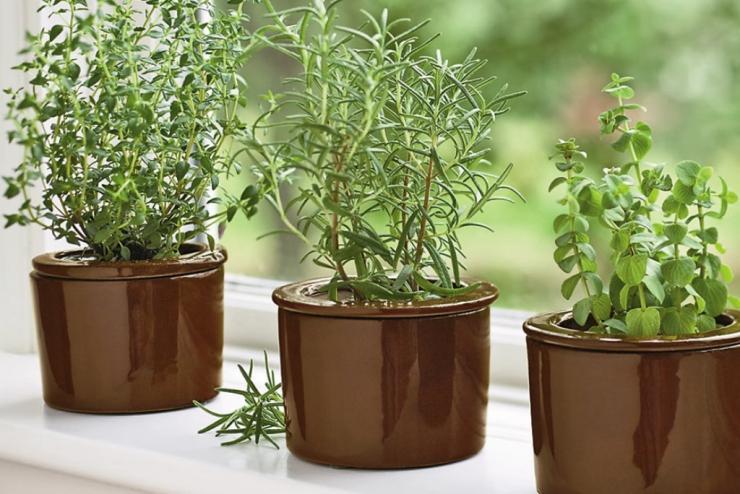 Полезные растения выращивание дома 62