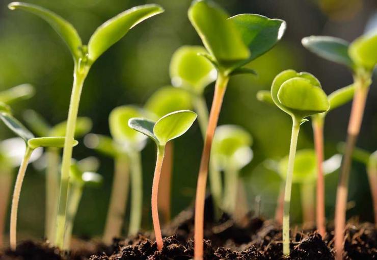 Стимуляторы роста для семян