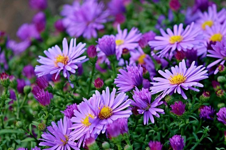 Какие цветы и овощи посадить в апреле в саду