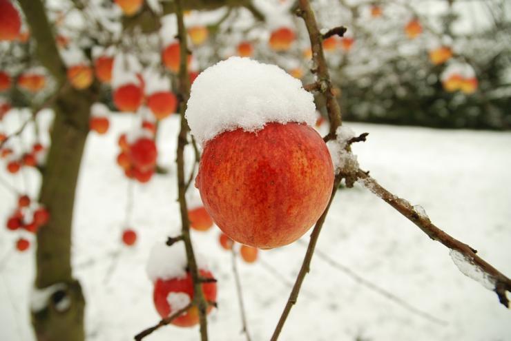 обрезка зимние повреждения