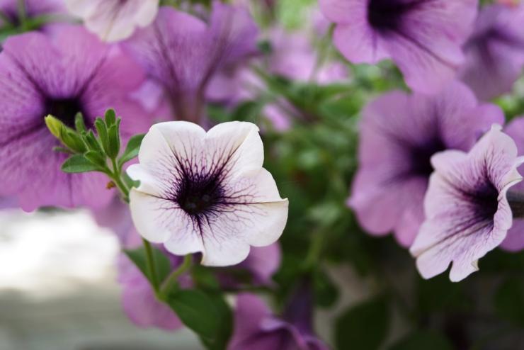 календарь цветовода май