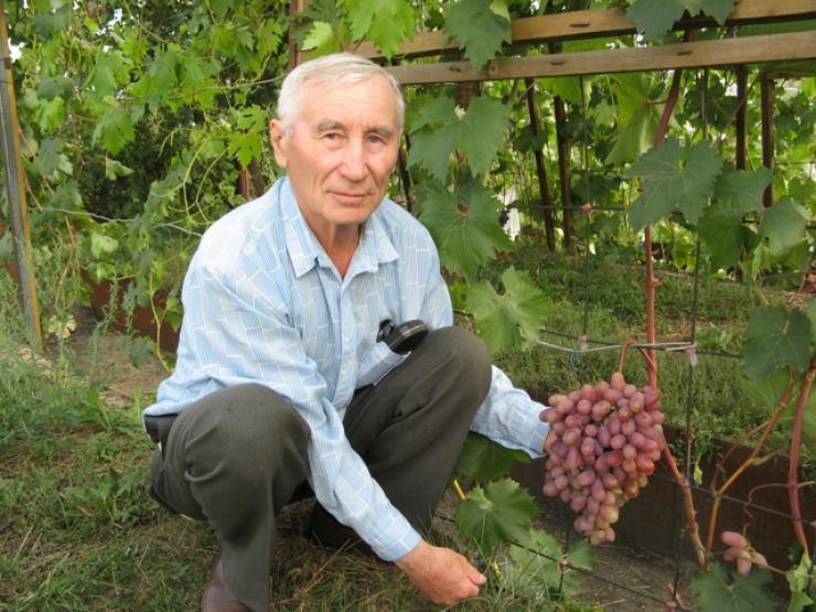 корягин автор обской технологии выращивания винограда