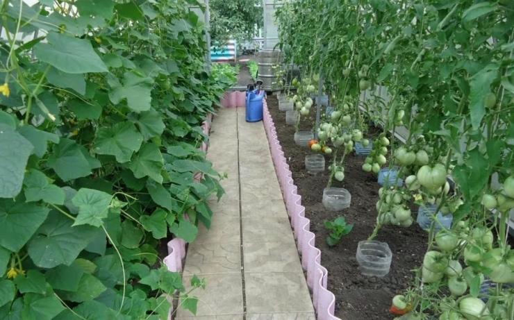 условия выращивания растений в теплице